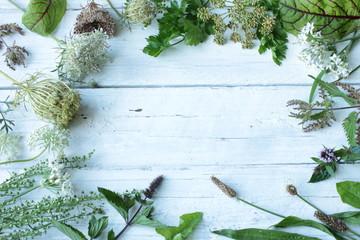 Wildkräuter frisch grün Blüten Tisch Kräuter Wild