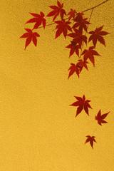 モミジの紅葉  金色背景