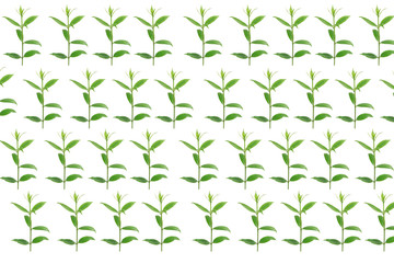 green leaves on white background,Summer branch with fresh green leaves,green