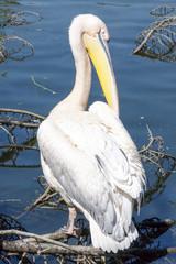 Pelican gets sun bath