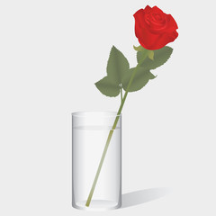 The red rose standing in a glass of water