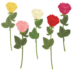 Five roses of different colors