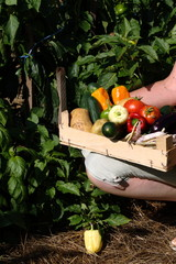 Hands holding crate on knees with mixed vegetables