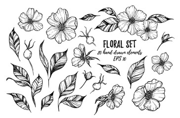 Vector illustrations - Floral set (flowers, leaves and berries).