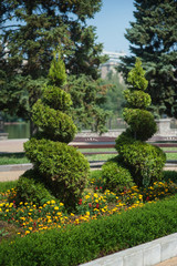 beautiful decor trees and plant in the park