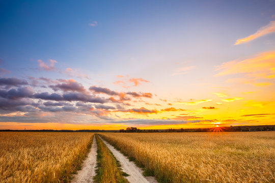 Rural Countryside Road Through Wheat Field Landscape. Yellow Barley Field In Summer