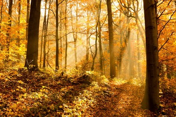 unusual forest in autumn, the sun's rays light up the morning fog