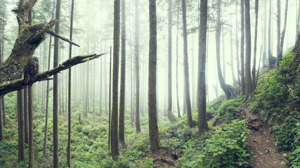 Owl overlooks a misty forest trail