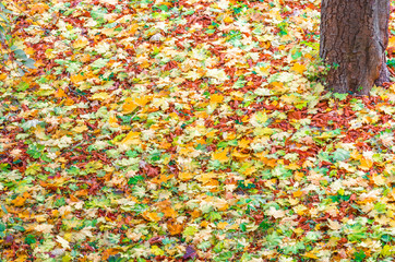 Colorful background image of fallen autumn leaves