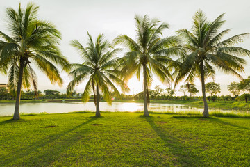 Beautiful senset at green park landscape with grassfield and coconut tree palm