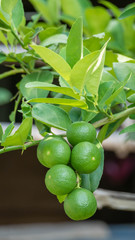 Lime green tree