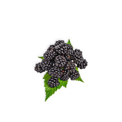 Fresh blackberry with green blackberry leaves isolated on white