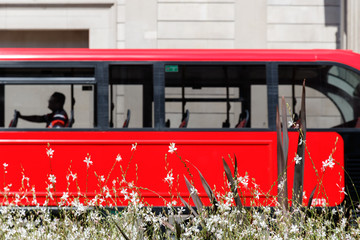 White flowers with a red double decker bus blurred in the background
