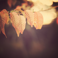 Vintage autumn leafs