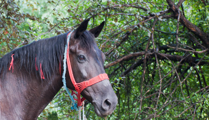 portrait of horse on the street