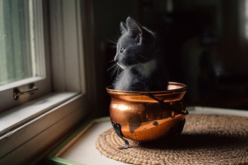 Kitten sat in a copper pot indoors