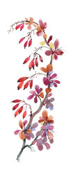 Watercolor illustration with autumn dogwood berries isolated on white background.