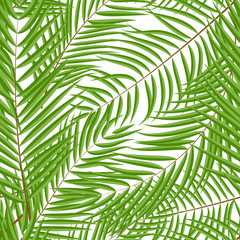 Poster Tropische Bladeren Beautifil Palm Tree Leaf Silhouette Seamless Pattern Background