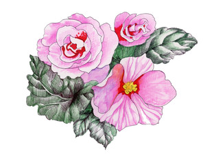 Watercolor blooming pink roses flowers illustration
