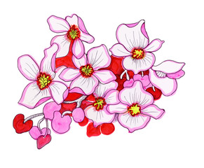 Colorful pink flowers, watercolor illustration.