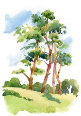 Watercolor natural summer wood landscape