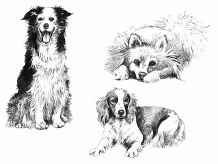 Hand-drown inked dogs set.