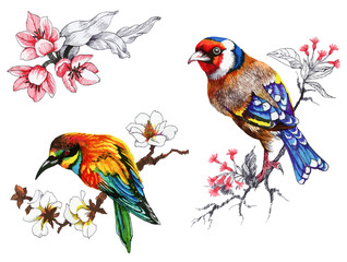 Bright birds on branches with flowers ink hand drawn illustration.