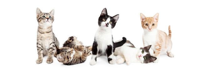 Banner of Cute Playful Kittens