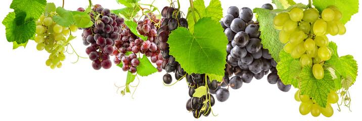 grappes de raisins et feuilles de vigne, fond blanc