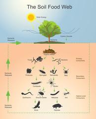The Soil Food Web.