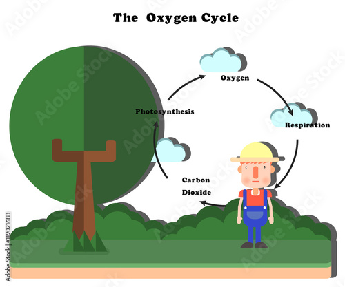 The oxygen cycle stock image and royalty free vector files on the oxygen cycle ccuart Images