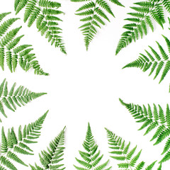 fern branches frame isolated on white background. flat lay, top view