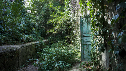Old ruin with wooden door and ivy