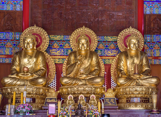 Tree buddha statues at Wat Borom Raja Kanjanapisek.This is a Chinese temple in Thailand,.Religious places and attractions that are popular.Shoot on 25July2016 Nonthaburi Province,Thailand.