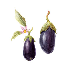 Watercolor hand drawn eggplant