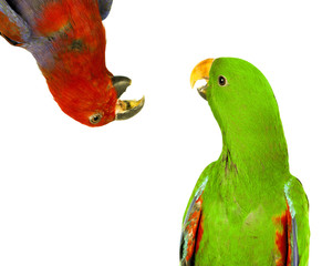 beautiful red and green macaw parrots