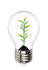 plant growing inside the light bulb