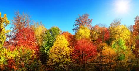Bunte Bäume im Herbst bei Sonne und strahlend blauem Himmel