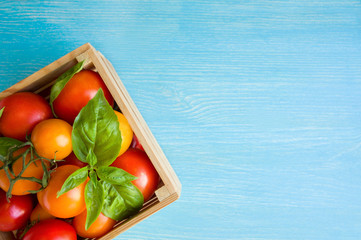 Fresh ripe tomatoes and basil in box on a blue background. Red and yellow tomatoes. Top view with copy space.