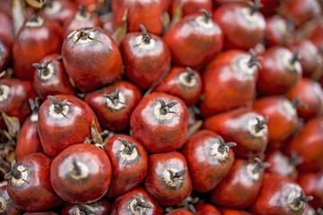 Palm oil fruit,close up
