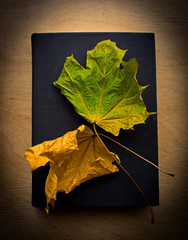 Book and yellow leaves