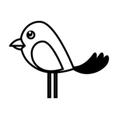 bird animal wing pet mascot  nature vector illustration