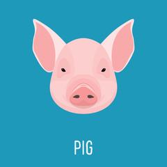 Cartoon pig portrait isolated on blue. Nature, animal and wildlife theme
