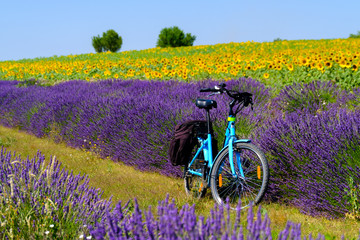 Fond de hotte en verre imprimé Prune Electric bicycle in the lavender and sunflower field in Provence, France