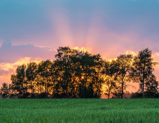 Sunset over oat field. Kaluga region of Russia