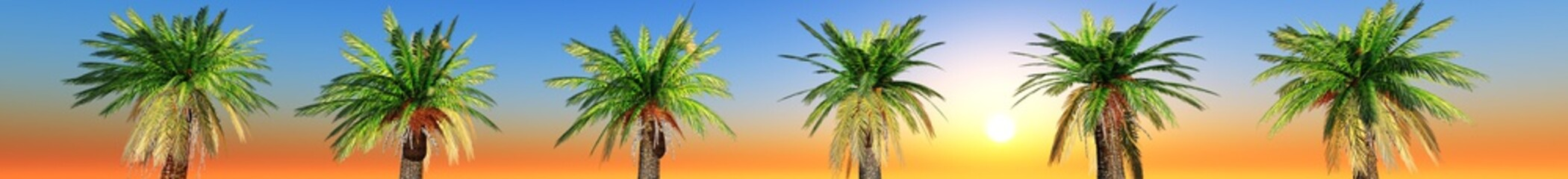 a row of palm trees at sunset. panorama. banner.