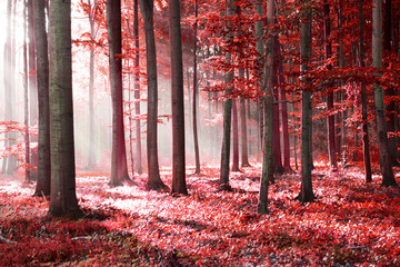 Red forest abstraction
