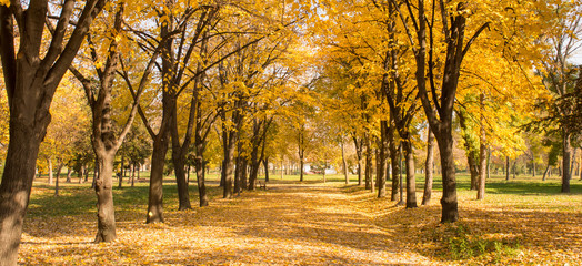 Park path covered in fallen leaves