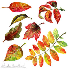 Poster Waterverf Illustraties Watercolor Nature Clipart - Autumn Leaves