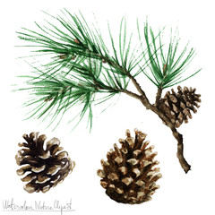 Watercolor Nature Clipart - Pine